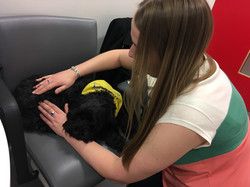 pets as therapy massage