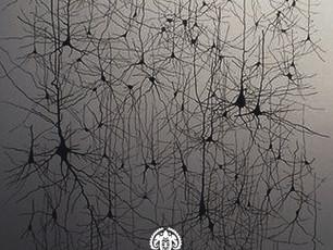 Кристаллическая решётка сознания человека.