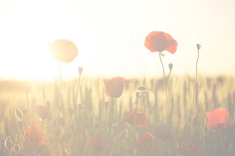 poppies-174276_1920_edited.jpg