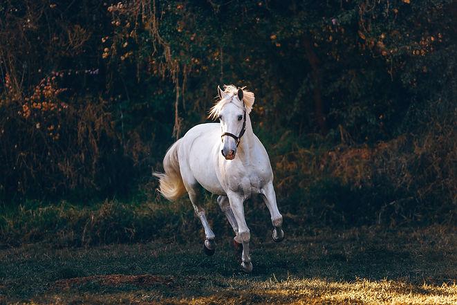 white-horse-running-on-green-field-19963