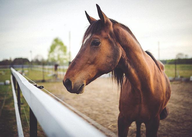 brown-horse-on-field-6468.jpg