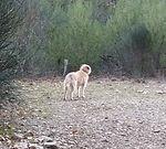 autre chien (2).jpg