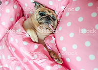 chien rose (2).png
