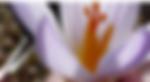 fleur (2).png