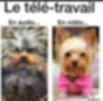 chiens télétravail (2).JPG