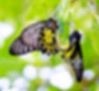 papillons_edited.jpg