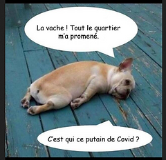 chien epuise.png