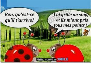 coccinelle_edited.jpg