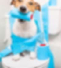 chien toilette (2).jpg