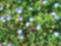fleure.jpg