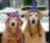 chien_edited.jpg