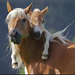 cheval_edited.png