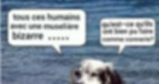 chien%2520(2)_edited_edited.jpg