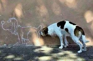 chien renifleur (2).jpg