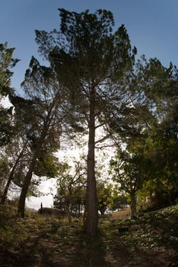 העץ ביד ושם
