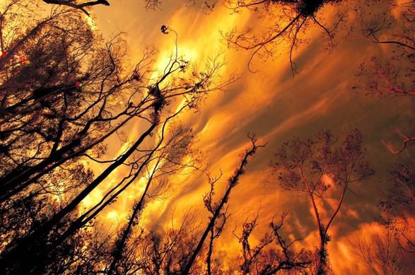 Burning forrest.JPEG