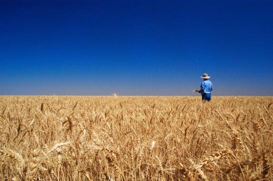 Grain corp TIF.JPEG
