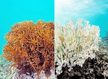 Recifes de Corais coloridos são lindos, não é mesmo?