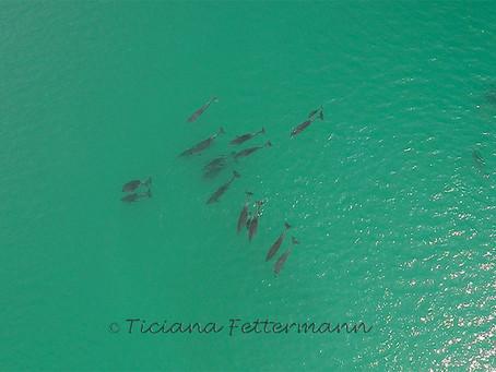 Tecnologia Inovadora para Estudar Cetáceos