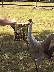 Crane reading to Dad.JPG
