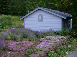 Gift Shop and Lavender Garden