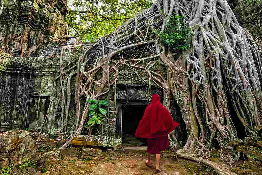 buddhist-monk-jungle