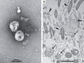 A Novel Coronavirus from Patients with Pneumonia in China, 2019.