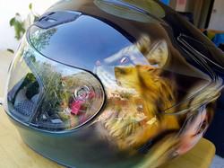 casque-cat