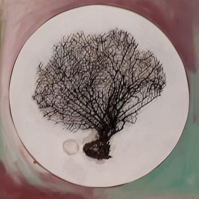 Dona arbre