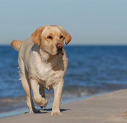 Spiaggia Per cani-dog beach capalbio toscana