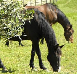 Equitazione Capalbio Toscana