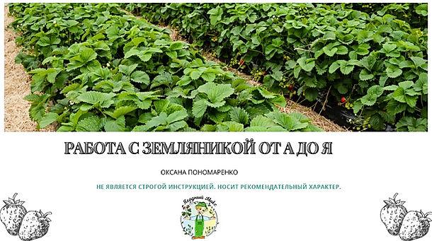 Титульный лист методики по выращиванию з
