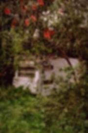 Caravan Morrison (edited-Pixlr).jpg
