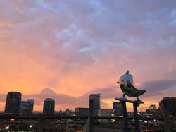 SkaterBIRD at Sunset May 2015