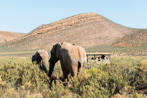 Aquila combo: game drive + horse back OR quad bike with breakfast and lunch