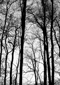 Dark woods.