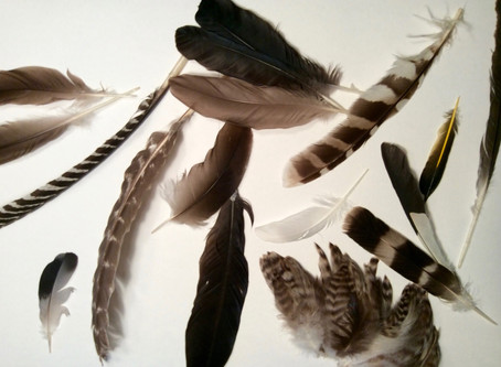 Pennies (Feathers) From Heaven