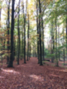 Counselling, Ecotherapy, Bristol, Nature, Therapy, Depression, Anxiety