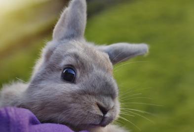 Kanin på tur