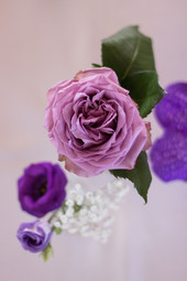 Purble Flower