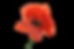 poppy-flower-1131868_1920.png