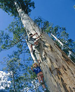 Pemberton's Climbing Trees