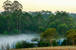 Explore the amazing Southern Forests