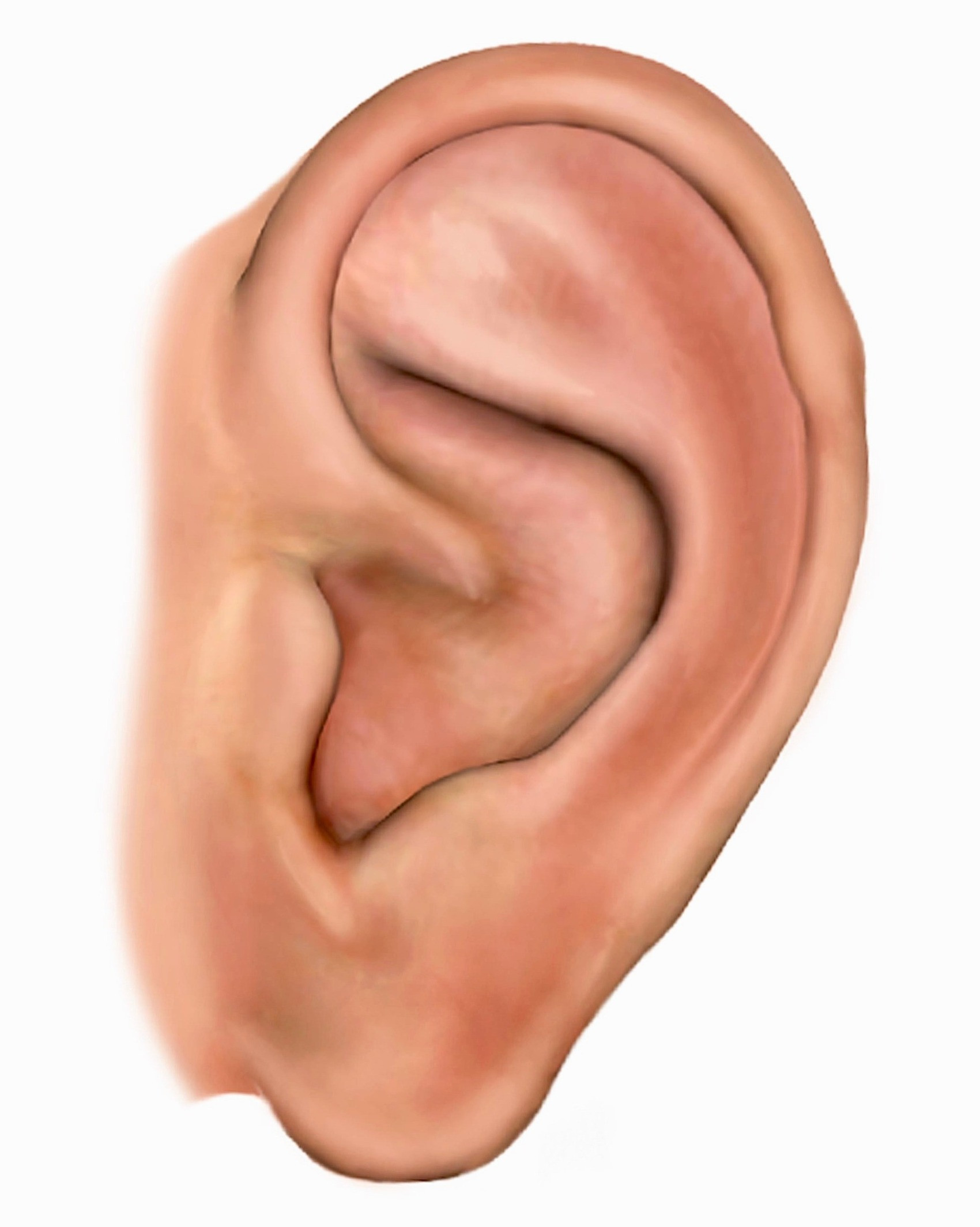 AURICULAR THERAPY  EXPERT TRAINING