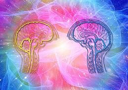 cerveau | bioresonance