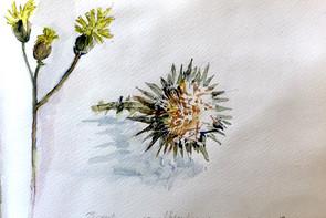 chardons-Carnet Grèce | Jozefa peintures