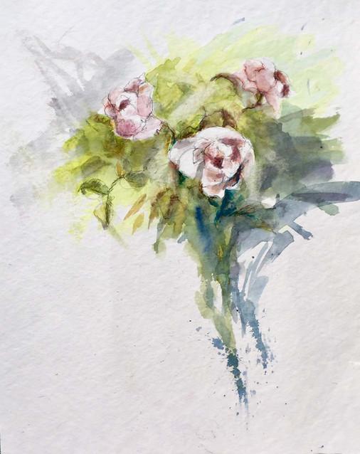 les roses en aquarelle