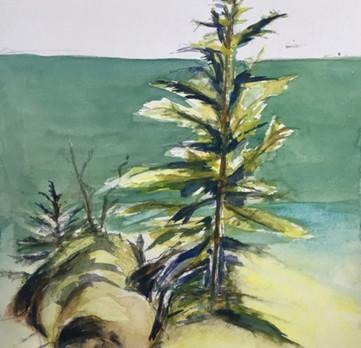 Arbres   Jozefa peintures