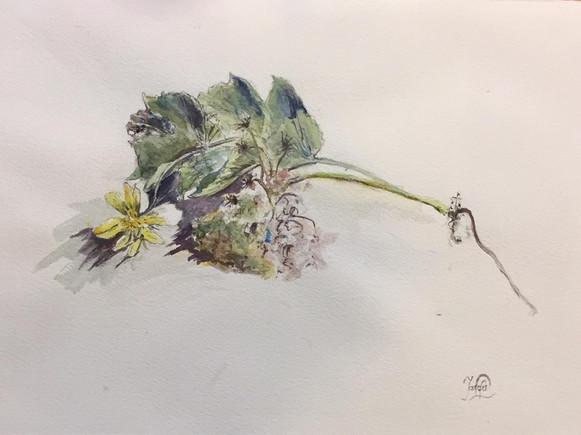 Fleur | Jozefa peintures