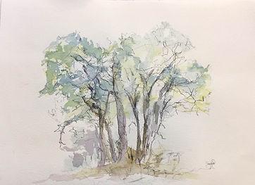 arbres-dessin.jpg